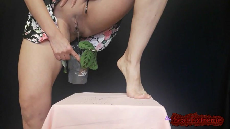 Big pile, New scat, Scatting Girl, Shitting Ass FullHD 1080p I plant a flower and fertilize it [Big pile, Scatting Girl, Shitting Ass, Piss, Solo]